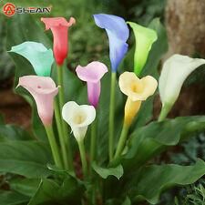 50 pcs Rare Colorful Calla Lily seeds CODE02