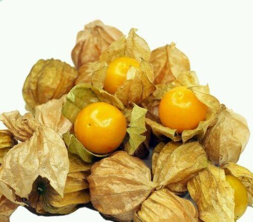 ☺100 graines de physalis orange lanterne japonaise