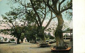 Postcard-Salem-Willows-MA