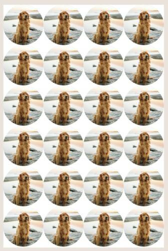 icing sheet.1068 Edible Cupcake Toppers x20 Golden Retriever Topper-wafer sheet