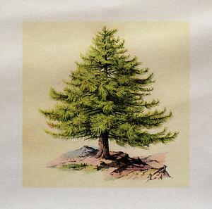Mistletoe Christmas  Printed On Fabric Panel Make A Cushion Upholstery Craft