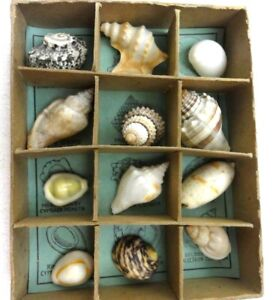 Vtg-Collection-Ocean-Treasures-12-Species-of-Shells-From-Around-the-World-c1951