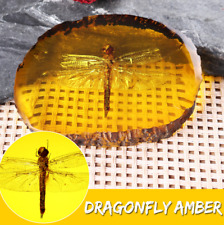 Dragonfly Amber Insect Pendant Inclusion Fossil Bug In Amber