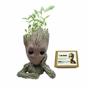 Zen Juniper Bonsai Tree Pot Little Planter Japanese Mini Indoor Decoration Home Ebay