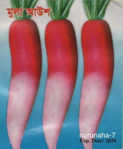 Mula লাল আউশ মুলা Indian Bangladeshi 100 Seeds Early Red Radish Mola Muli