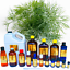 3ml-Essential-Oils-Many-Different-Oils-To-Choose-From-Buy-3-Get-1-Free thumbnail 34