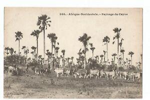 CPA-AFRIQUE-AOF-PAYSAGE-DU-CAYOR