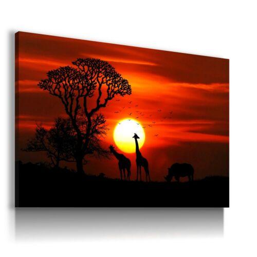 DESERT SAVANNAH SUNSET GIRAFFE RHINO Canvas Wall Art AN177 UNFRAMED-ROLLED