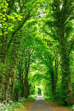 Path In Green Trees Forest Photography Backgrounds 6x9ft Vinyl Photo Backdrops