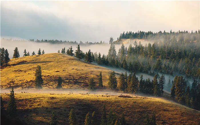 Fog Pine Hill Peak Cloud Sky 3D Full Wall Mural Photo Wallpaper Print Home Decal