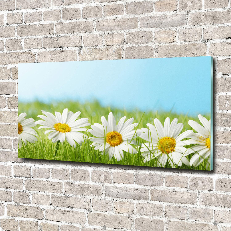 Glas-Bild Wandbilder Druck auf Glas 140x70 Deko Blaumen & Pflanzen Gänseblümchen