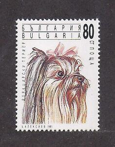 Dog Art Full Body Study Portrait Postage Stamp YORKSHIRE TERRIER Sharjah CTO