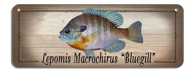 Bluegill Rustic Wall Sign Plaque Gifts Men Sea Fishing Fishermen Fish Metal