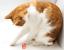 thumbnail 6 - Twizlrz-Durable-Colour-Bouncing-Interactive-Pink-Orange-Blue-Cat-Toy-Toys