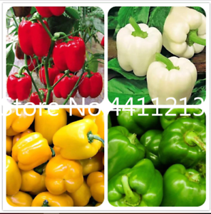 100 Pcs Seeds Mixed Yellow Purple Sweet Bell Pepper Vegetables Paprika Bonsai N