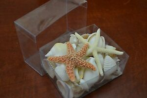 50+ PCS ASSORT WHITE SEA SHELL WITH STARFISH BEACH WEDDING DECOR BOX #7633A