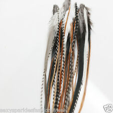 25pc Natural Mix 100 Whiting Grizzly / Wholesale Feather Hair Extensions )
