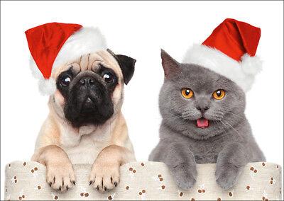 15 WEIHNACHTS-ELCHE: lustige Weihnachtskarten im Set  5 10 20 50,100 St. 30