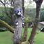 Novelty-Resin-Garden-Tree-Hugger-Peeker-Animal-Fairy-Ornament-Outdoor-Fence-Shed thumbnail 9