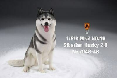 Z MRZ04 1//6 Siberian Husky2.0  Animal Model Collectible Static Model Toys MR
