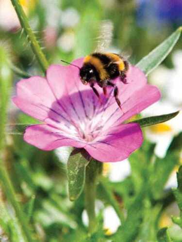 100/% Fleur Mix Cottage Garden Fleurs sauvages Graines MIX 6-1g//5g//10g 1g//m2