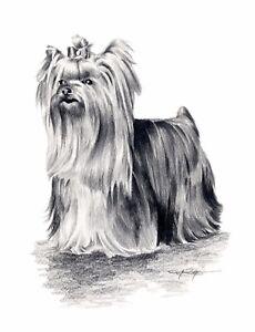 YORKSHIRE-TERRIER-Art-Print-Pencil-Drawing-DOG-8-x-10-Signed-by-Artist-DJR-w-COA