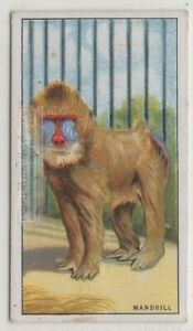 Mandrill-Primate-Ape-Monkey-Africa-90-Y-O-Trade-Ad-Card