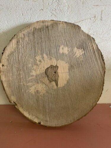 Ahorn 50x3 cm Baumscheibe Holzscheibe