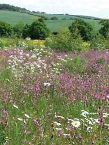 100/% Fleur Mix Vivace Fleurs sauvages Graines Mix 5-1g//5g//10g 1g//m2