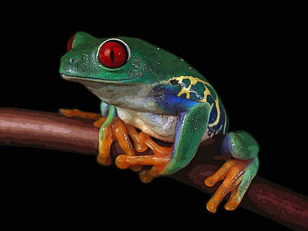 5443.Small frog with rot eyes sitting on branch.POSTER cor Home Office art
