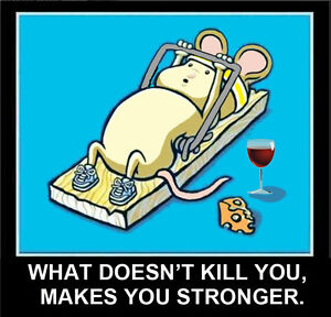 mouse working out in mousetrap what doesn t kill you makes you