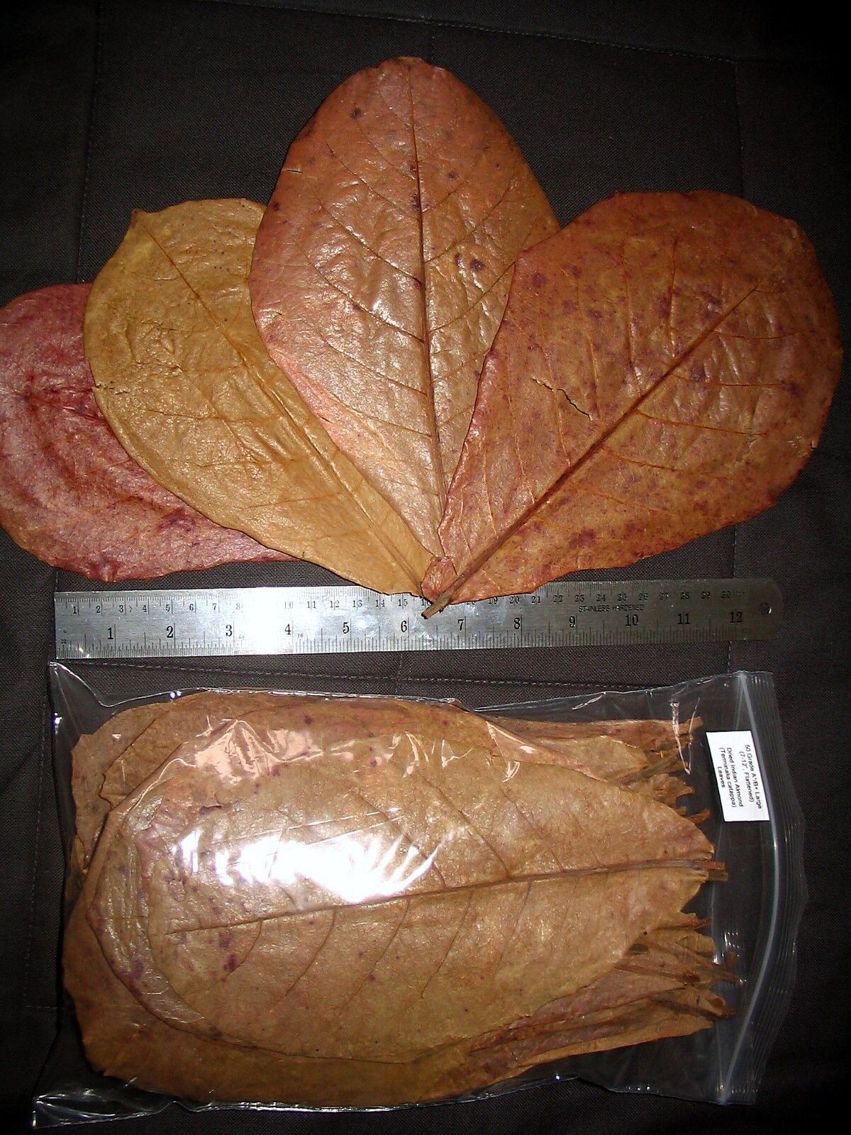 Amy's Amy's Amy's 190 LARGE A B+ INDIAN ALMOND CATAPPA LEAVES betta, discus, shrimp, plecos 75db03