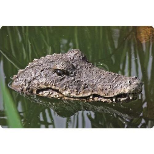 Tête de crocodile flottante pour décorer l/'étang