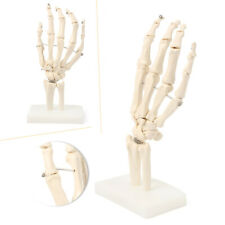 Skeleton Hand Joint Anatomical Model Human Medical Anatomy Teaching Life Size