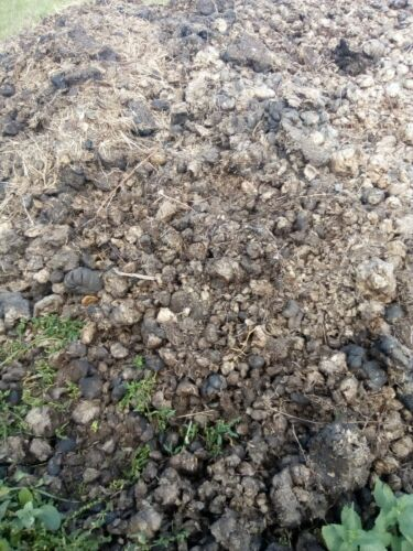 horse manure as much as you like