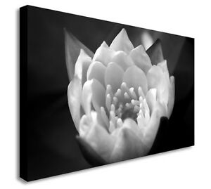 Black-amp-White-Flower-Close-Up-Floral-Canvas-Wall-Art-Picture-Large-Any-Size