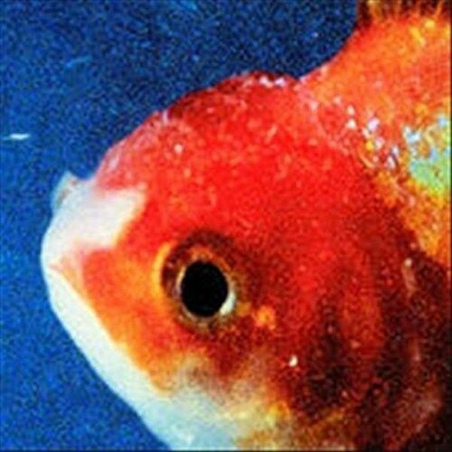 Vince Staples - Big Fish Theory [New CD] Explicit
