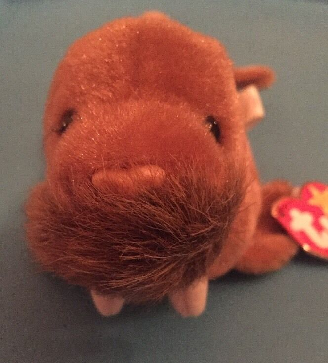 TY BEANIE BABY PAUL THE WALRUS MINT WITH MINT TAGS RARE ERRORS