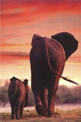 POSTER FREE SHIP #PE1021  RC33 K ANIMALS:AFRICAN DREAMS PHOTO ELEPHANTS