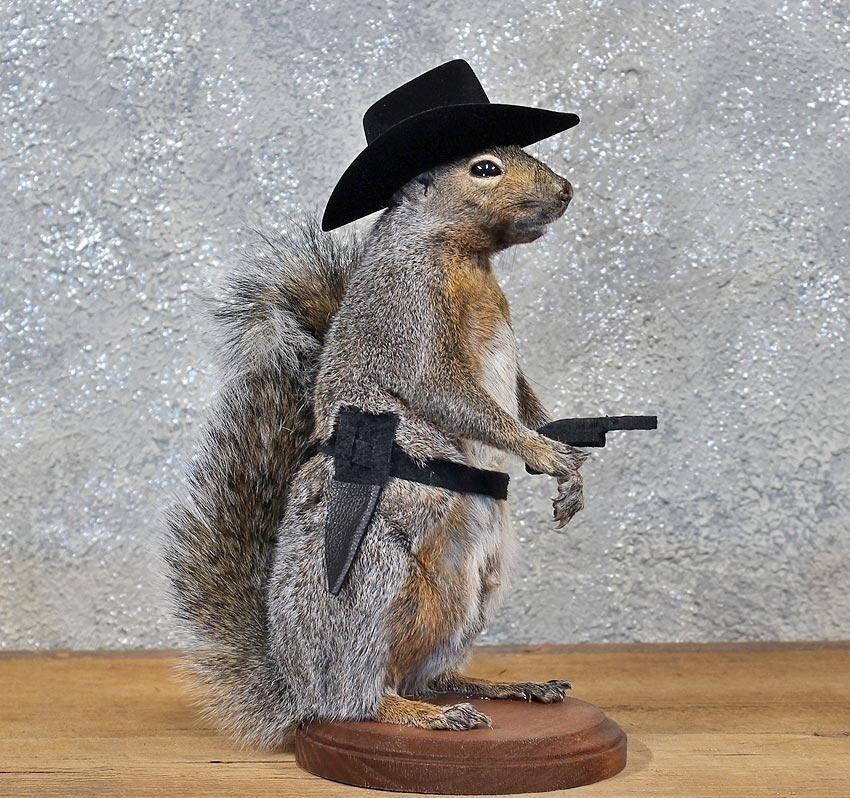 Cowboy Ardilla Taxidermia animal Estatua En Base De Hogar U Oficina Regalo