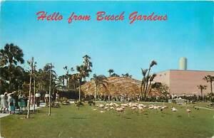 USA-florida-busch-gardens-Postcard