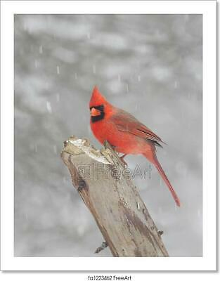 Northern Cardinal Perched On Snow Art Print Home Decor Wall Art Poster G