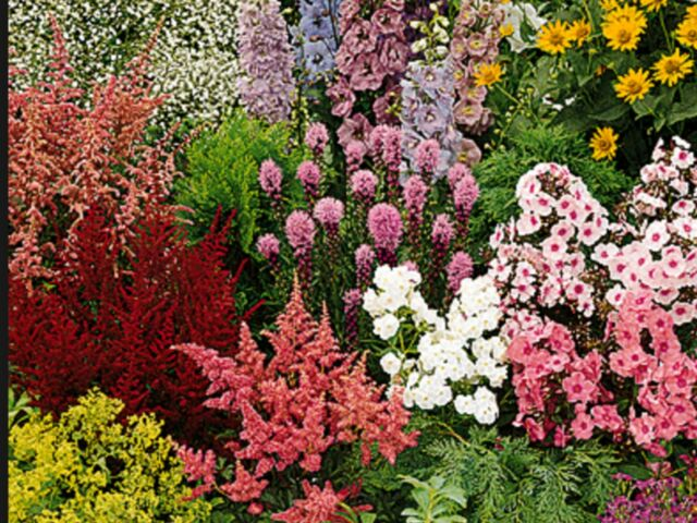 FLOWER SEEDS COTTAGE GARDEN MIX ( APPROX 500 SEEDS )
