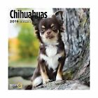 Bright Day Calendars Chihuahuas 2019 16 Month Wall Calendar 12x12 Inch