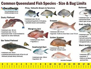 Image Is Loading Queensland Fishing Guide Decal 105cm Long Ruler Sticker