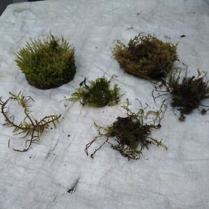 6 Different Named Greenhouse Grown Terrarium Mosses Lot B Ebay