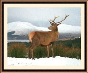 Stag-In-The-Snow-New-amp-Exclusive-Cross-Stitch-Kit