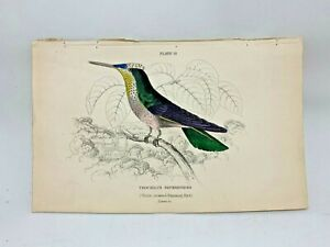 1st-Ed-Hand-colored-Jardine-039-s-Natural-History-1834-Violet-crown-Hummingbird-12