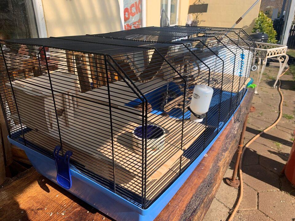 Bur til gnavere, Hamster marsvin