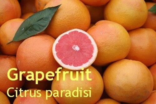 ***Grapefruit Öl, pink,  naturrein, 50ml, frisch-fruchtig!!
